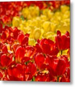 Tulips At Ottawa Tulips Festival Metal Print