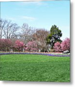 Tulips In The Park. Metal Print