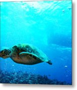 Turtle Cove Metal Print