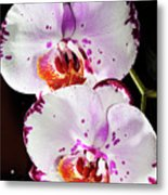 Twin Orchids Metal Print