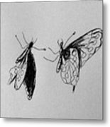 Two Butterfly Metal Print