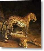 Two Leopards Lying In The Exeter Metal Print