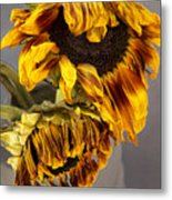 Two Sunflowers Tournesols Metal Print