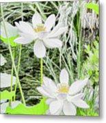Two Water-lilies Metal Print
