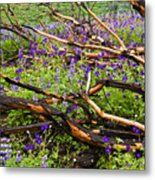 Under The Charred Laurel Sumac Metal Print