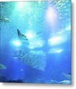 Undersea Deep Background Metal Print