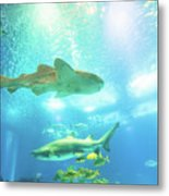 Undersea Shark Background Metal Print