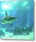 Underwater White Shark Metal Print