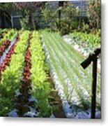 Vegetable Garden  Metal Print