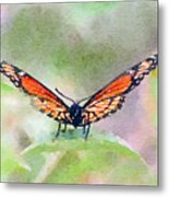 Viceroy Butterfly  Metal Print