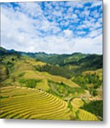 Vietnam Rice Terraces Metal Print