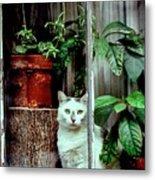 Village Cat Metal Print