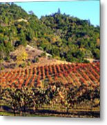 Vineyard 3 Metal Print
