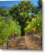 Vineyard Sauvignon Blanc Grapes Metal Print