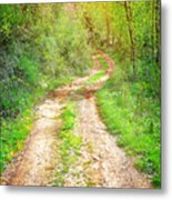Walkway In Secluded Deciduous Forest Metal Print