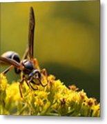 Wasp On Wildflower Metal Print