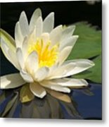Water Lily Metal Print by Valeria Donaldson