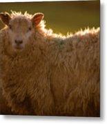 Welsh Lamb In Sunny Sauce Metal Print