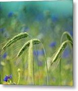 Wheat And Corn Flowers Metal Print