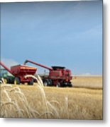 Wheat Harvest 2016 Metal Print