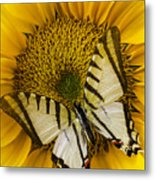 White Butterfly On Sunflower Metal Print