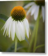 White Coneflower Metal Print