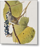 White-crowned Sparrow Metal Print