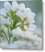 White Flower Close-up Metal Print