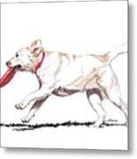White Frisbee Dog Metal Print