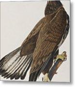 White-headed Eagle Metal Print