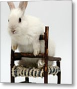 White Rabbit  Metal Print