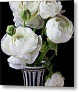 White Ranunculus In Black And White Vase Metal Print by Garry Gay
