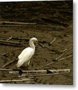 White Snowy Egret Metal Print