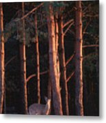 White-tail Deer Metal Print