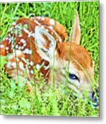 White-tailed. Virginia Deer Fawn Metal Print