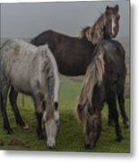 Wild Ponies On The Preseli Mountains Pembrokeshire Metal Print