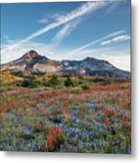 Wildflowers At Mt. St. Helen's Metal Print
