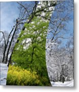 Winter And Summer Metal Print