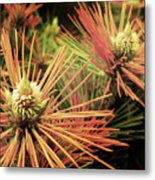 Winter Details Metal Print