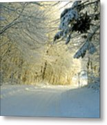 Winter Forest In The Warm Light From The Sunset Metal Print by E Petersen