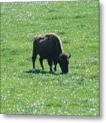 Wisconsin Buffalo Metal Print