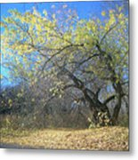 Wolley Metal Print