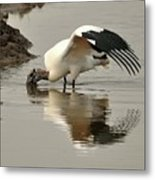 Wood Stork Winging It Metal Print