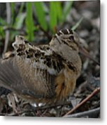 Woodcock In The Woods Metal Print
