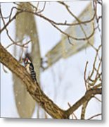 Woodpecker And Windmill Metal Print