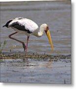 Yellow Billed Stork Metal Print