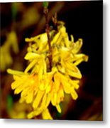 Yellow Buds Metal Print