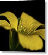 Yellow Clover Metal Print