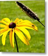 1 Yellow Daisy 2 Yellow Bugs Metal Print