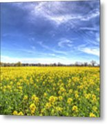 Yellow Fields Of Summer Metal Print